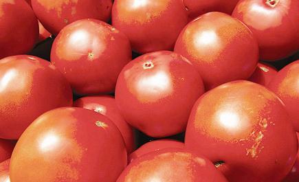 طماطم الشيخوخة وأمراض القلب والسرطان